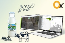 wise-cow-website-development-project-successfully-delivered-by-ibrandox